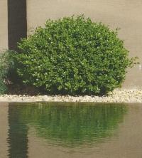 jardin gecko jj derboux jardinier paysagiste montpellier nice bouc bel air 13 accueil. Black Bedroom Furniture Sets. Home Design Ideas
